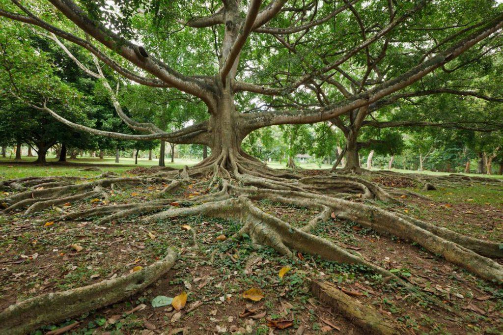 waco-foundation-repair-experts-root-barrier-1_orig